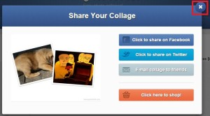 V dalším kroku můžete ihned začít sdílet výtvor na Facebooku nebo Twitteru. Pokud ji chcete stáhnout, stiskněte křížek.