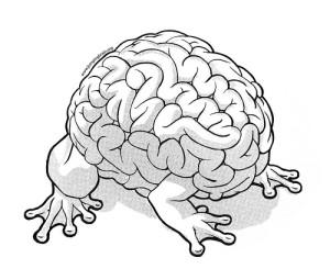 Takto nějak vypadá mozek