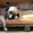 """Nejen pro lidi a jejich zdraví je důležitý odpočinek a kvalitní spánek. Určitě víte, že pokud sami sobě nedopřejete potřebný čas na dobití """"baterek"""" jste mrzutí a nemáte dobrou náladu. […]"""