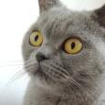 Kočky jsou tvorové vybíraví a každý majitel ví, že kočku jen tak něčím neuctí. Zároveň platí, že každá kočka je individuální, a proto neexistuje přesně napsaný návod jak a čím […]
