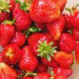 Samosběr jahod Počátkem léta každoročně začíná sezóna jahod. Sladkých červených plodů nevelkých rozměrů, které chutnají snad úplně všem. Doba, po kterou jsou jahody kdostání, není nijak dlouhá, zároveň ceny na […]