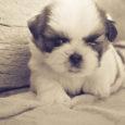 Granule pro psy vybírejte vždy podle složení, věku (štěně,dospělý, senior) a velikosti (krmivo pro malá, střední a velká plemena) psa. Pokud má váš pes alergii, hledejte granule hypoalergenní či bezobilné […]