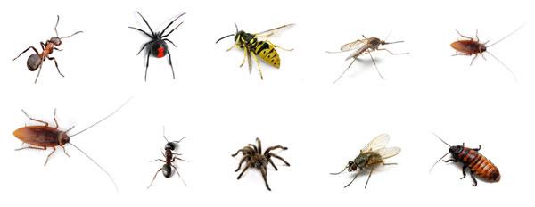 Sítě proti hmyzu