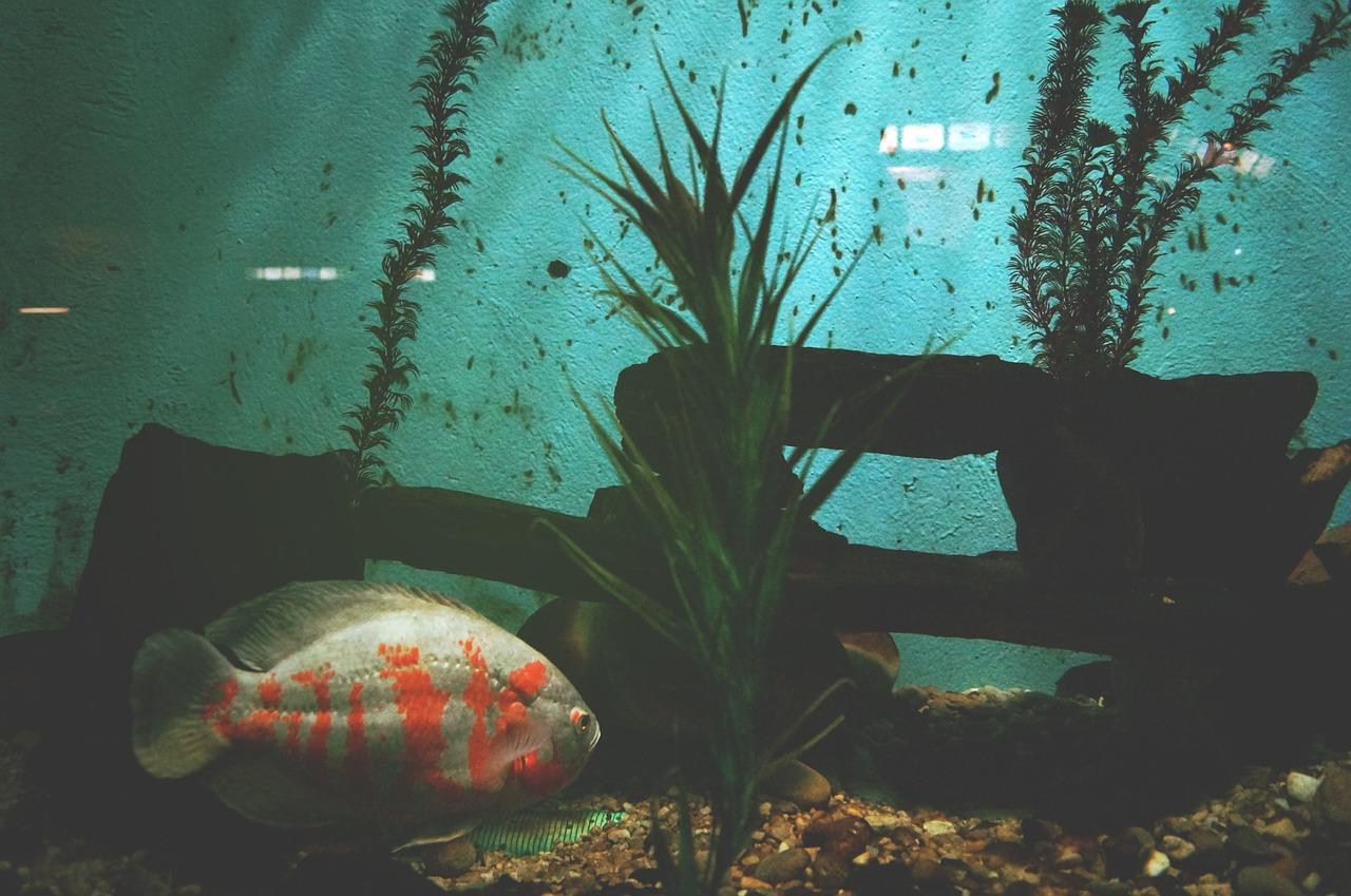 akvárium - umístění