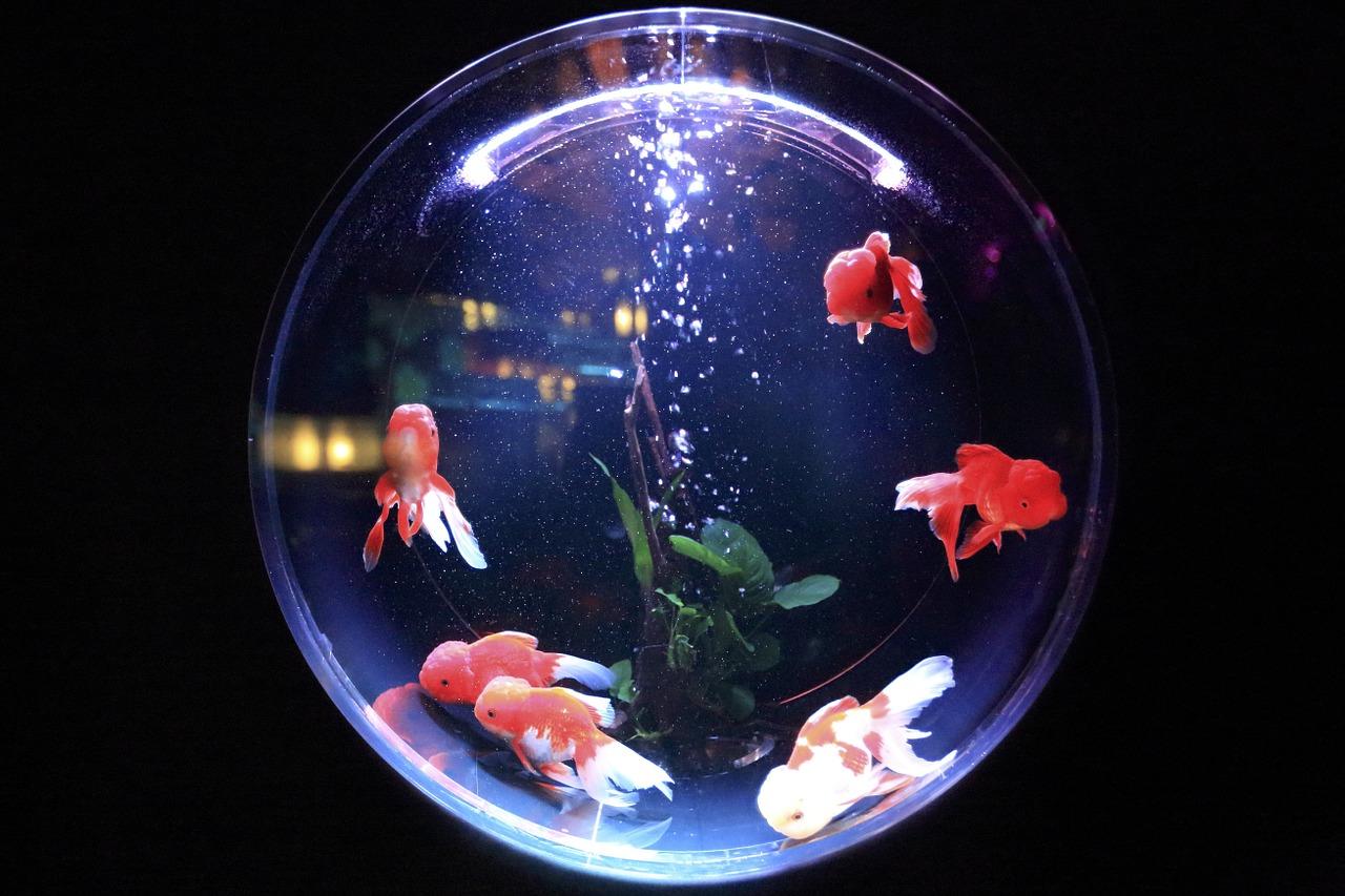 rozměry akvária